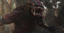 Ultimate-predator-images