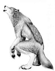 Anima Werewolf