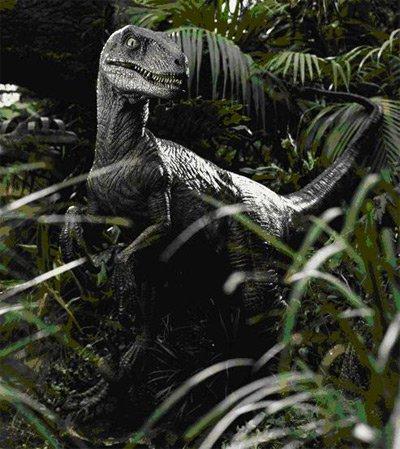 Velociraptor antirrhopus 2kheartdfanonwiki