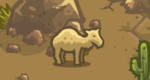 Scn2 Camel