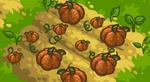 Scn Pumpkins