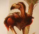 Zeropteryx