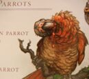 Red Carrion Parrot