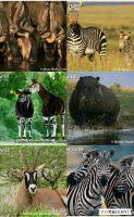 File:African animals by loveall231-da8escg.jpg