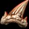 АкулийЗуб