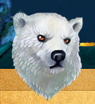 Белая-медведица