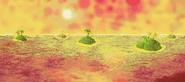 Orange Ocean 6