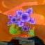 Wii-flower-07-meta