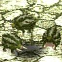 Baby Gourd Boars CA11070 (Sora SC Monster)