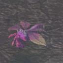 Parasite Prima CA12250 (Sora SC Monster)