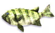 Forest Gill (Sen III)