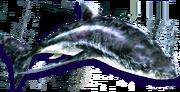 Hide Shark (Sen III)