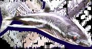 Phantom Shark (Sen III)
