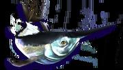 Blue Marlin (Sen III)