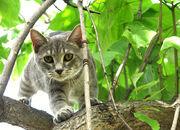 Katze-auf-baum