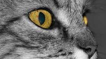 Auge..