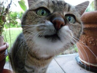Neugierige-Katze