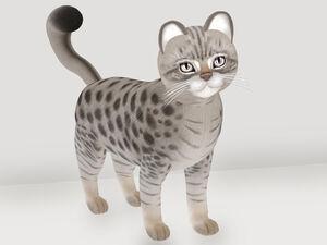 KittyCatS! - Gentleman