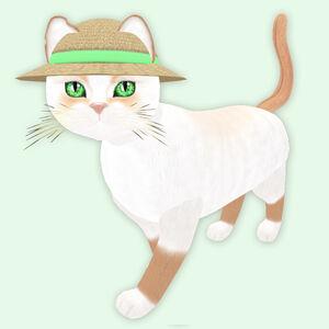 Snowshoe Red - Lucky Irish Clover Eyes