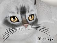 KittyCatS - Meisje