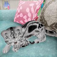 Kitten Loves her New Born