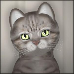 KittyCatS! - Blushy Lady