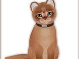 Abyssinian - Cinnamon (fur)