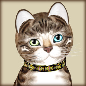 KittyCatS! -Bengal Tawny -