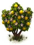 Sw passionfruit last