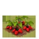 Sw strawberries last