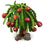 Sw dragonfruit last