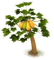 Sw papaya last