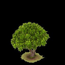 Sw lychee tree nofruit
