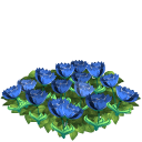 Tulip flower bed blue last