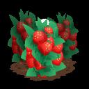 Strawberry last