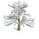 Snowy tree last