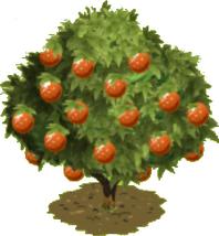 Orange Tree2
