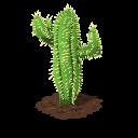Cactus last