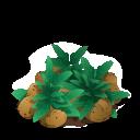 Potato last