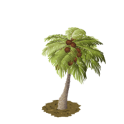 Palm last
