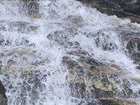 Wasser Neves