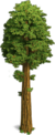 Tree-Large sequoia