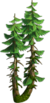 Tree-Double fir-tree