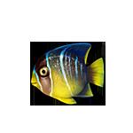Sea sea-fish