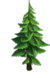 Tree-Small fir-tree