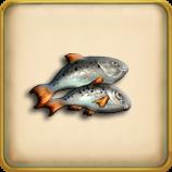 Fish framed