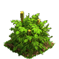 Tomatoes plant ph2.png