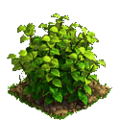 Raspberry plant ph2.png