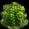 Raspberry plant ph2