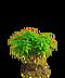 Lemon tree ph1